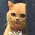 楚楚河河 title=